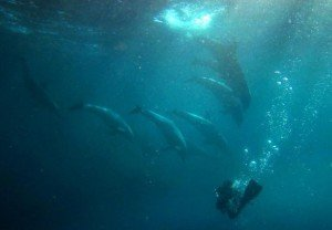 dauphins 7
